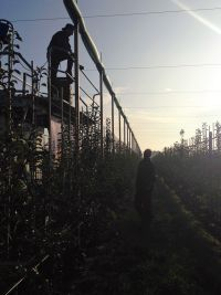 father and son working Fruit nursery Ham
